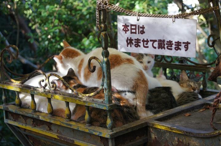 cats2_1.jpg